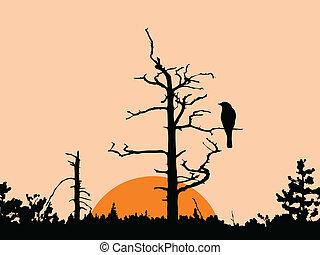 asciutto, albero, vettore, silhouette, uccello