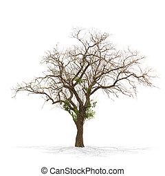 asciutto, bianco, albero, isolato, morto