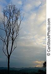 asciutto, blu, rami, cielo, albero, fondo.