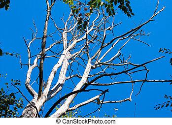 asciutto, cielo blu, fondo, albero