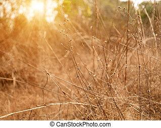 asciutto, estate, primo piano, erba, sole