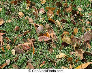 asciutto, foglie, cadere, su, il, ground.