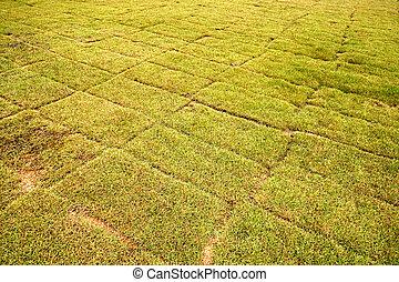 asciutto,  football, campo, erba