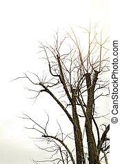 asciutto, grigio, albero, fondo, cielo