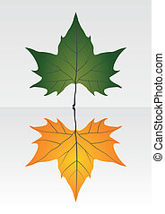 asciutto, leaf., verde