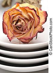 asciutto, piastra, rosa, singolo, fondo, bianco