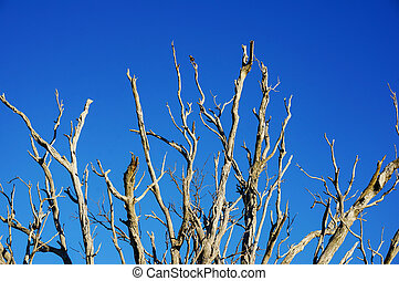 asciutto, rami albero, contro, cielo blu, su, il, fondo