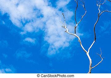 asciutto, rami albero, sopra, cielo blu, fondo