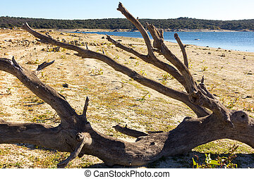 asciutto, riva, albero, lago