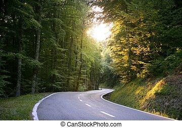 asfalt, meandrowy, krzywa, droga, w, niejaki, bukowy, las