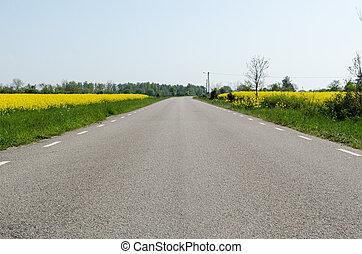 asfalto, nível, campos, rapeseed, à margem estrada, vista, estrada, chão
