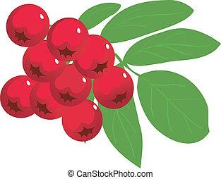 Ash-berry