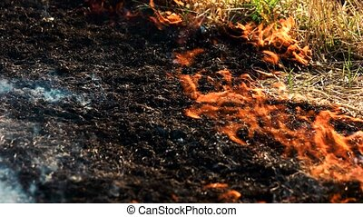 Ash of burnt grass in the fire. Fire flame motion close up.