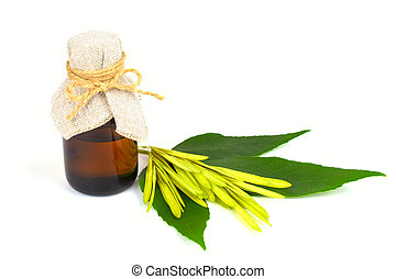 Ash Tree (Fraxinus) Twig, Seeds and Leaves with a Medicinal...