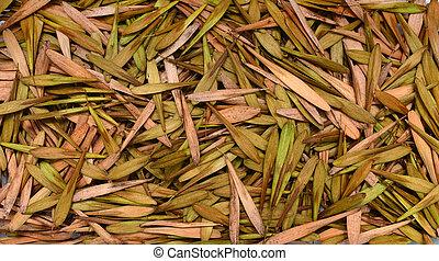 ash tree seeds texture - Fraxinus americana tree seeds plant...