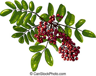 Ashberry Branch Composition with Berries and Leaves - Vector...