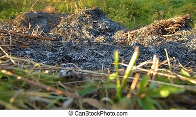 ashes after fire on field - smoking and smoldering ashes...