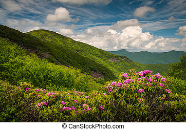 asheville, norra carolina, blå ås boulevard, vår blommar, sceni