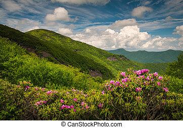 asheville, north carolina, blue hegygerinc parkway, visszaugrik virág, sceni