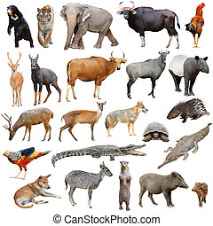 asia animals isolated - asia animals species isolated on ...