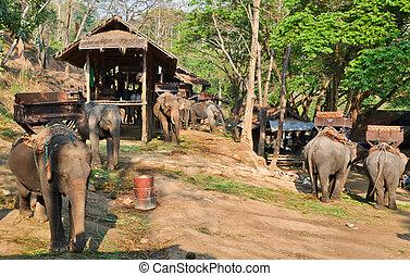 asia, elefante, campeggiare, in, vilage, di, settentrionale,...