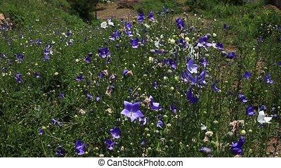 asia flower