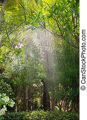 Asia garden with sprinkler spraying water - Morning in ...