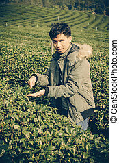 Asia Man in tea plantation