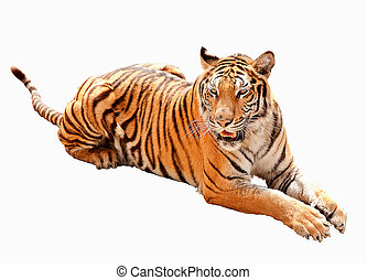Asia tiger the icon of Malaysia country in the isolate background