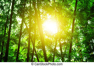 Asian bamboo forest with sun flare
