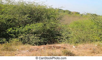 Asian Bush from window of train - Asian Bush from window of...