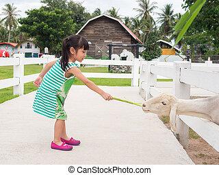 Asian child girl feeding a Sheep