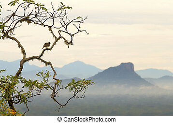 Asian Dove sitting on a tree on the background of the valley and mountains