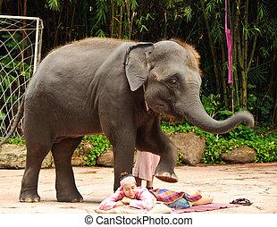 BANGKOK, THAILAND - MAY 25: This elephant was massaging a female tourist in an elephant show at Safari world May 25, 2010 in Bangkok, Thailand.