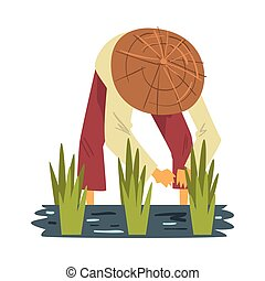 Asian Farmer in Straw Conical Hat Harvesting Rice in Paddy Field Cartoon Style Vector Illustration on White Background