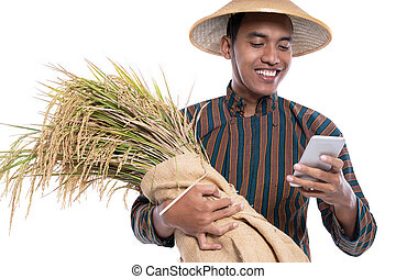 farmer using smartphone while holding a rice grain