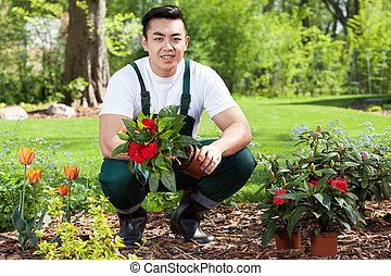 Asian gardener planting flowers in a garden