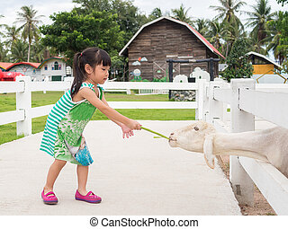 Asian girl Feeding a Sheep