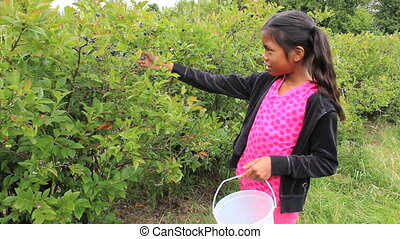 Asian Girl Picking Blueberries