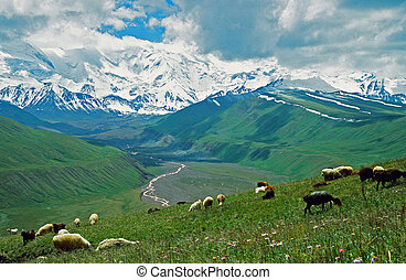 asian landscape - steppe, sheep and pamir mountains - A...
