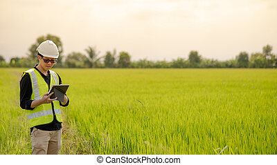 Asian male agronomist observing on rice field