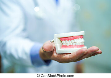 Asian man doctor orthodontic dental professional dentist oral hygienist holding perfect mouth teeth jaw model during a training presentation.