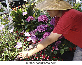 Asian Man Gardening Flowers