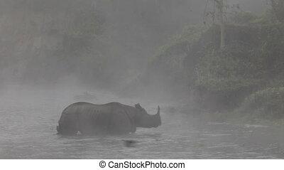 asian, nosorożec