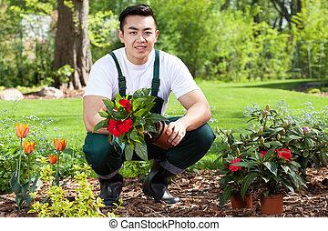 asian, ogrodnik, dosadzenie, kwiaty