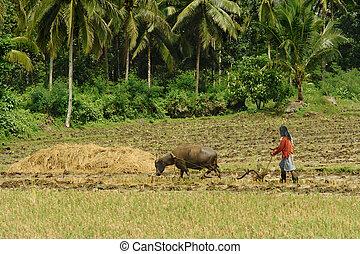 Asian primitive farming - Southeast Asian poor farmer...