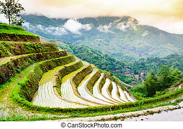 Asian rice terrace landscape on a cloudy day