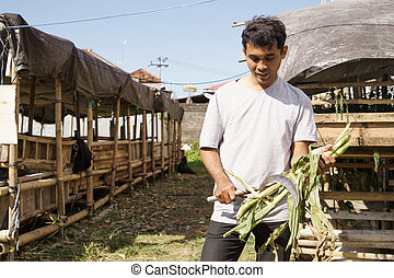 asian traditional farmer preparing some food