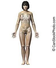 Asian woman - Anatomy of an asian woman - skeleton