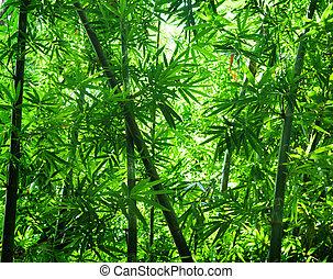asiat, bambu skog, synhåll